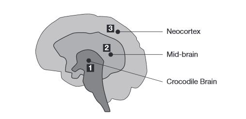 crocodile-brain